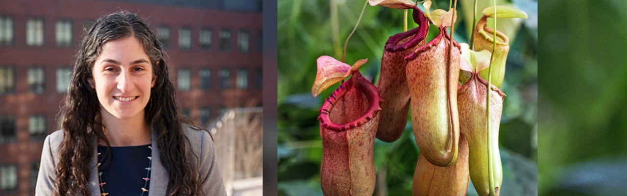Jessica Schiffman on the left, photograph of a pitcher plant on the right